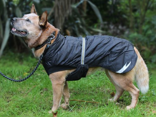 Summit Parka raven on NZ dog left