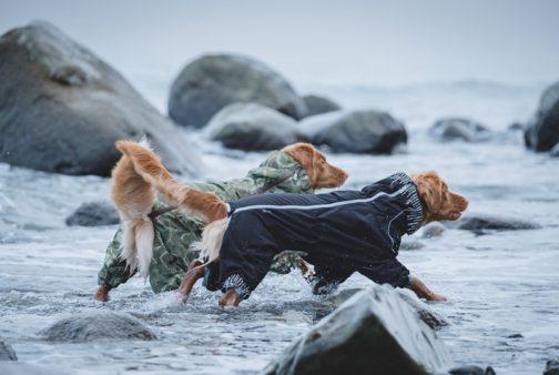 Downpour Suit on dogs