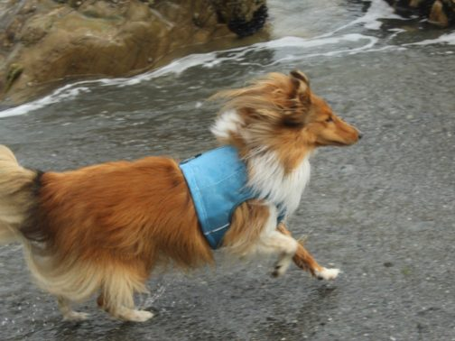 Cooling Vest on Dog NZ