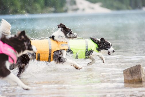 Life Savior Lifejacket three dogs NZ