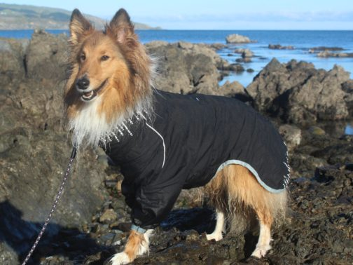 Hurtta Rainblocker on dog NZ