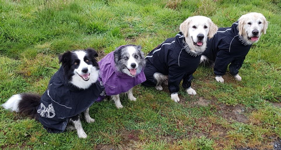 Wintry Dogs in a row NZ
