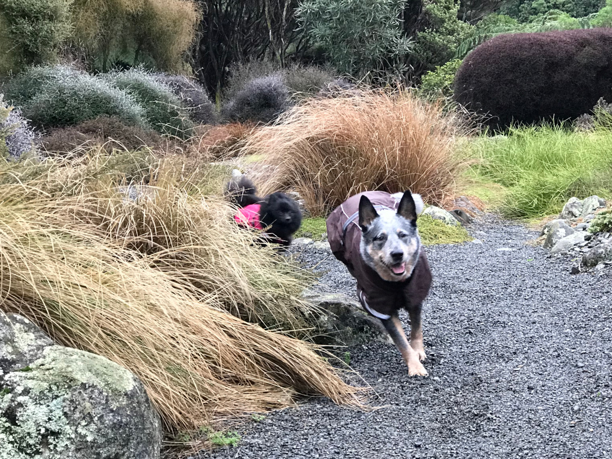 Some dogs running NZ