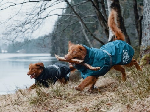 Hurtta Monsoon raincoat on dogs NZ