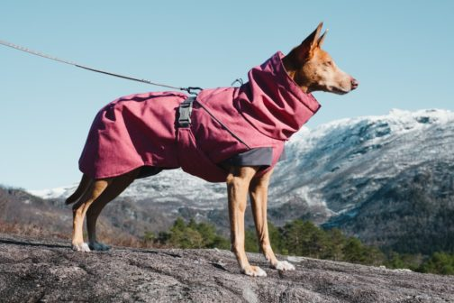 Expedition Parka on dog NZ