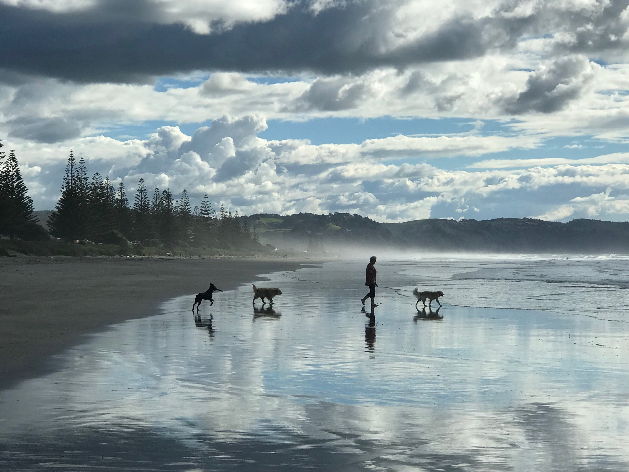 Ohope Beach walking dogs NZ