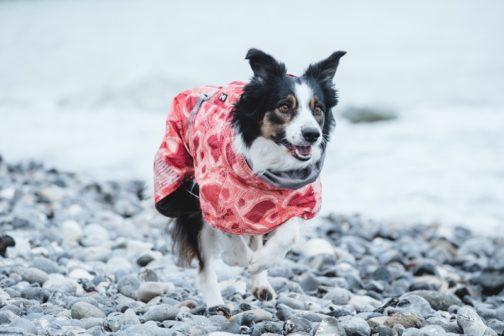 Hurtta Extreme Warmer on dog NZ